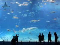 Chyba największe akwarium na świecie