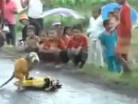 Małpka na motorynce