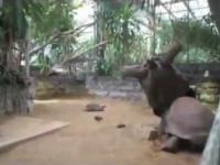 MMA w żółwim stylu.