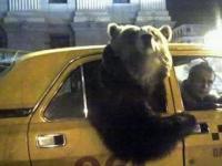 Takie rzeczy tylko w Rosji O_O