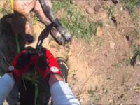 Motocyklista ratuje cielaka