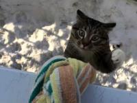 Kot wraca do domu