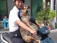 Pies wsiada na skuter like a Boss