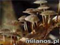 Jak rosną grzyby?
