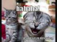 Śmieszne zwierzęta - kompilacja