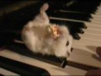 Choik kontra pianino