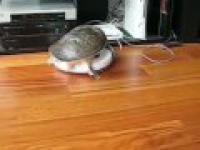 Żółwik - przejażdżka