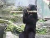 Japońskie Kung Fu niedźwiedzia!