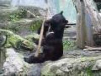 Kung-Fu niedźwiedź