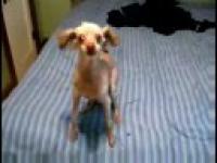 NAJDZIWNIEJSZY pies świata!
