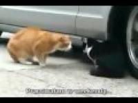 Koty ZDRADA