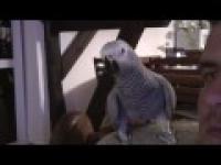 Papuga Arturek