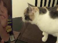 Kot, który nienawidzi Justina Biebera