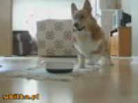 Taniec radości psa