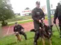 Karlino-Białogard (pies nie upilnowal psa)