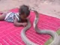 Dziecko vs Cobra