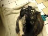 Opętany kot 2