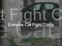 Epickie: Kocie MMA