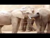 Fajny slon