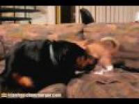 Zabawa kota z psem