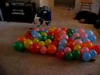 74 Przesiąknięte Złem Balony Vs Pies