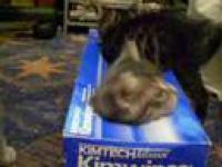To moje pudełko i basta