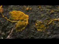 Niesamowity świat tropikalnych grzybów (BBC) [HD720]