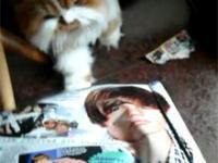 Polskie koty też nie lubią Justina Biebera