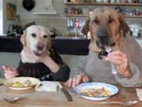 Psy też potrafią zjeść w restauracji