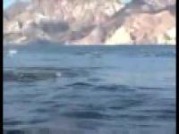 Film dla miłośników delfinów.