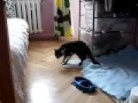 Kot pod narkozą