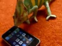 Kameleon kontra Iphone