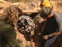 Roztopione aluminium w mrowisku