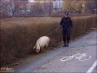 Ciężka jest praca policjanta