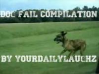 Psie faile - kompilacja 2011