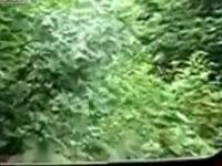 Pociągiem przez dżunglę