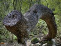 Pieniężne drzewa