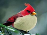 Angry Birds w rzeczywistości