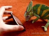 Kameleon przestraszył się iPhone'a