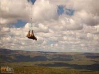 Latający nosorożec