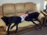 Dzieciaki i domowe zwierzątka
