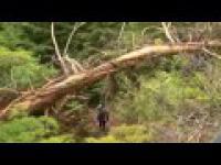 Drwale 4 / Ax Men 4 - Manhunt