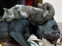 Zwierzęta po ciężkim dniu