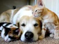 Pies śpiący z kotami