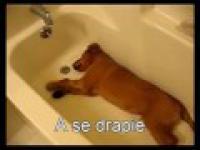 Pies w wannie
