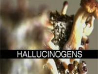 Narkotyki - Środki Halucynogenne