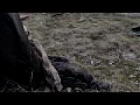 Polski film o zombie