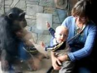 Szympans kontra dziecko