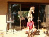 Żyrafa w domu