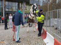 Koń okazuje miłość policjantowi